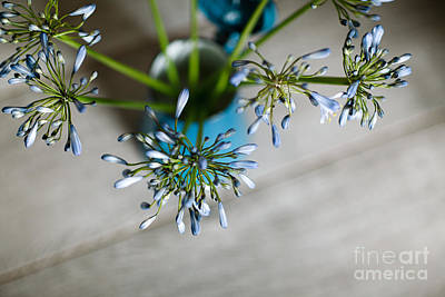 Still Life Royalty-Free and Rights-Managed Images - Still Life 04 by Nailia Schwarz