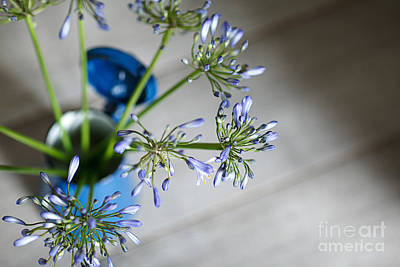 Still Life Royalty-Free and Rights-Managed Images - Still Life 05 by Nailia Schwarz