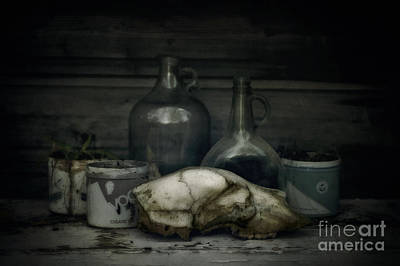 Tobacco Photograph - Still Life With Bear Skull by Priska Wettstein
