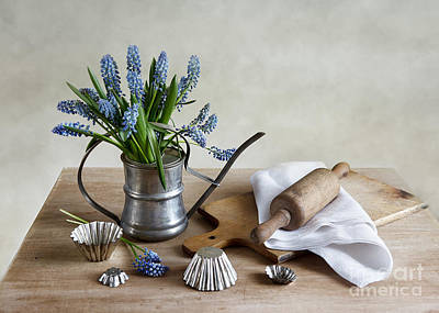 Blue Grapes Photograph - Still Life With Grape Hyacinths by Nailia Schwarz