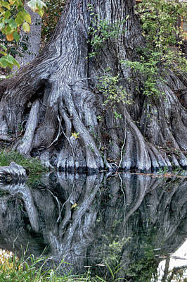 Photograph - Still Morning At Cypress Creek by James Woody