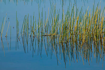 Photograph - Still Water And Grasses by Rich Franco