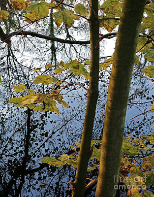 Art Print featuring the photograph Still Waters In The Fall by Andy Prendy
