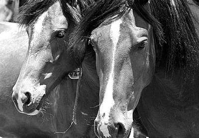 Photograph - Stolen Wild by Elizabeth Hart