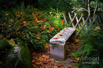 Eden Photograph - Stone Bench by Carlos Caetano