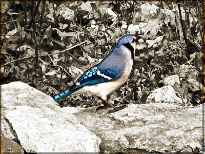Bird On The Ground Digital Art - Stone Blue Jay by Debra     Vatalaro