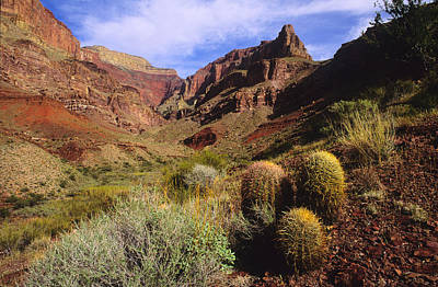 Rain Barrel Photograph - Stonecreek Canyon In The Grand Canyon by David Edwards