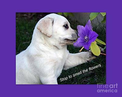 Fuzzy Digital Art - Stop And Smell The Flowers by Linda Galok