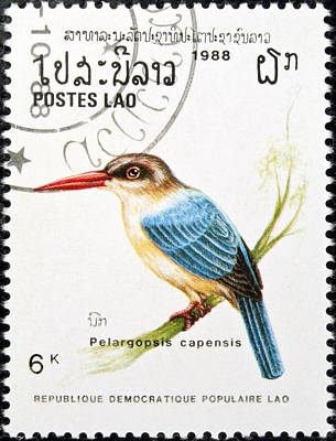 Tropical Stamps Photograph - Stork Billed Kingfisher Bird Stamp. by Fernando Barozza