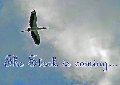 Photograph - Stork Is Coming Blue by T Guy Spencer
