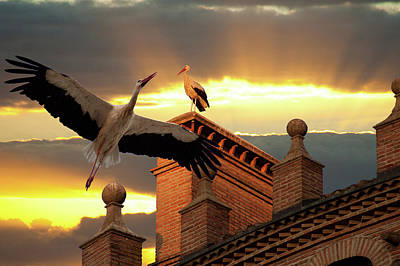 Photograph - Storks At Sunset by Harry Spitz