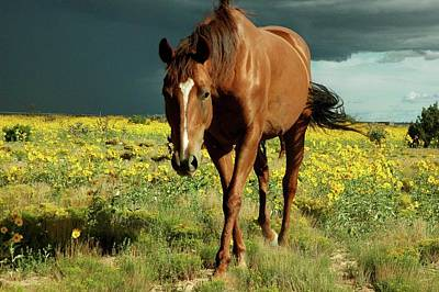 Storm Horse Art Print by photo © Jennifer Esperanza