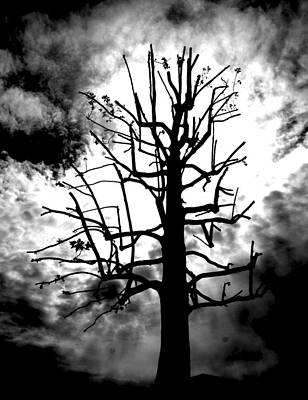 Storm Tree Art Print