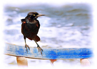 Photograph - Stowaway On The Ferry by Judi Bagwell