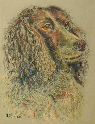 Straight From The Field - Spaniel Portrait Art Print by Richard James Digance