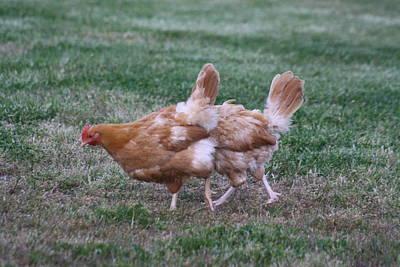 Strange Chicken Art Print