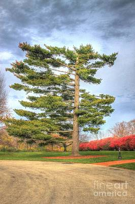 Photograph - Strangely Shaped Tree At Cincinnati Observatory by Jeremy Lankford
