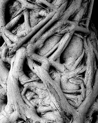 Tree Roots Photograph - Stranglehold by Bruce J Robinson