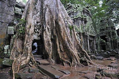 Strangler Fig Tree Roots Covering Temple Print by Sami Sarkis