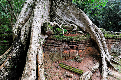 Strangler Fig Tree Roots On Ruins Print by Sami Sarkis