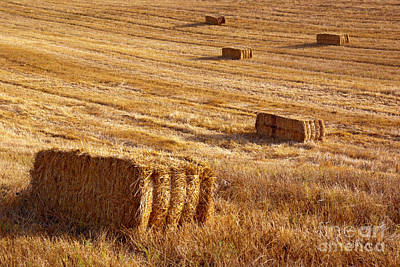 Bail Photograph - Straw Field by Carlos Caetano