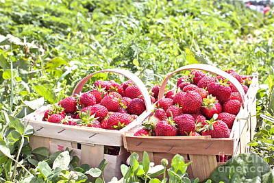 Strawberry Harvest Art Print by Carol Fielding