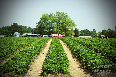 Photograph - Strawberry Pickers by Paulette B Wright
