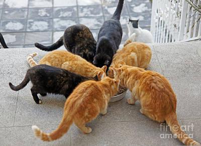 Photograph - Stray Cats 1 by Rod Jones