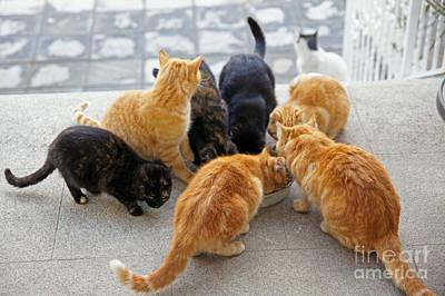 Photograph - Stray Cats 2 by Rod Jones