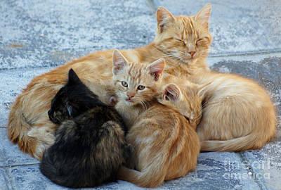 Photograph - Stray Cats 4 by Rod Jones