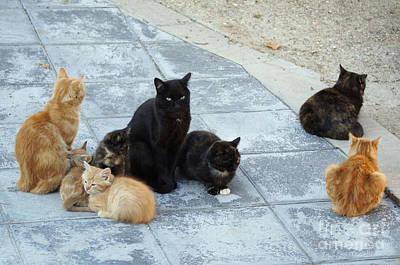 Photograph - Stray Cats 5 by Rod Jones