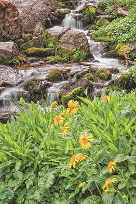 Photograph - Stream And Wildflowers by Douglas Pulsipher