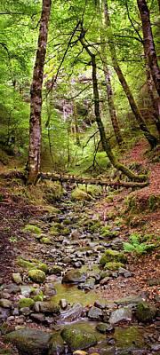 Photograph - Stream In Reelig Glen by Joe Macrae