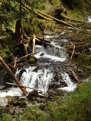 Perspective Photograph - Stream Of Timber by Casey P
