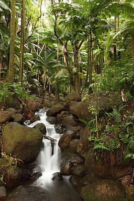 Stream Running Through The Rainforest Art Print by Robert Postma