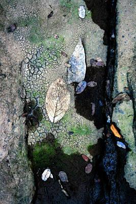 Streambed Leaves 1 Art Print by Jennifer Bright