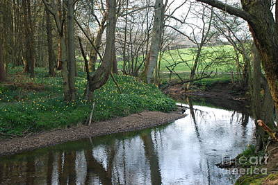 Photograph - Streams And Trees 2 by Doug Thwaites