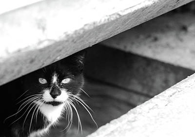 Photograph - Street Cat by Julie Niemela