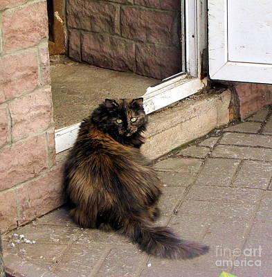 Street Cat Art Print by Yury Bashkin