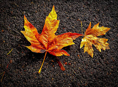 Art Print featuring the photograph Street Leaf by Ken Stanback