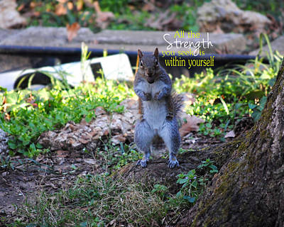 Photograph - Strength Encouraging Squirrel Photo by Jai Johnson