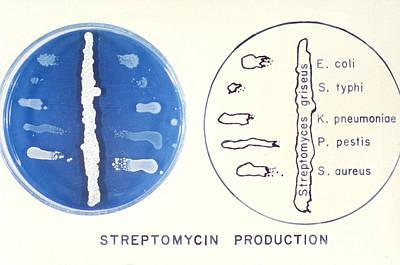 Streptomyces Art Print by Science Source
