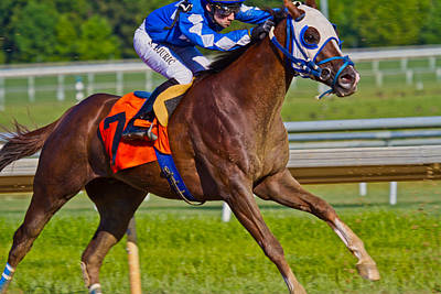 Blood Bay Horse Photograph - Stretch by Betsy Knapp