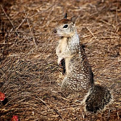 Photograph - Strike A Squirrelly Pose by Eric Tressler