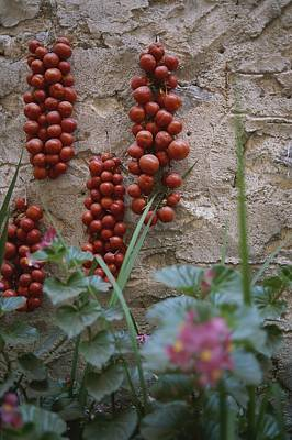 Strings Of Tomatoes Dry On A Wall Art Print by Tino Soriano