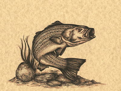 Fish Underwater Drawing - Striped Bass by Kathleen Kelly Thompson