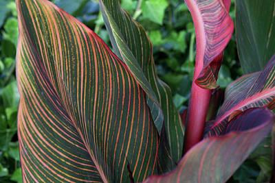 Photograph - Striped Leaf by Lorraine Devon Wilke