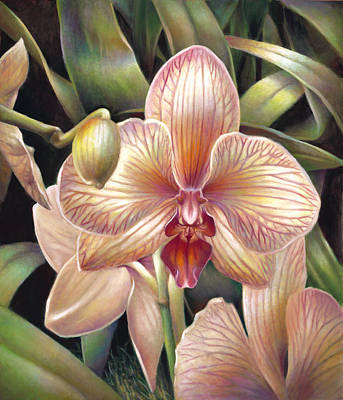 Striped Peach Orchid Art Print by Nancy Tilles