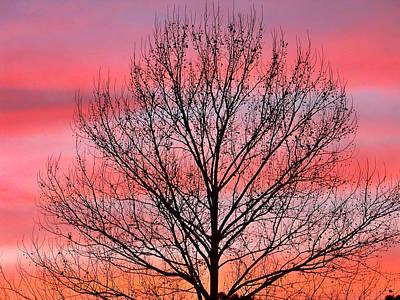 Photograph - Striped Sunset by Judy Wanamaker