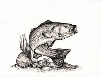 Fish Underwater Drawing - Striper by Kathleen Kelly Thompson